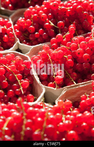 Red currants (Ribes rubrum), full frame - Stock Photo