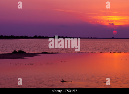 Sunset in La Camargue - Stock Photo