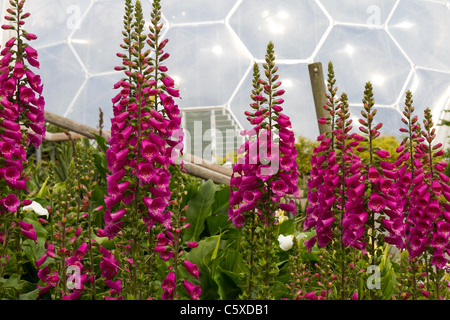 Biomes at the Eden Project, Cornwall - Stock Photo