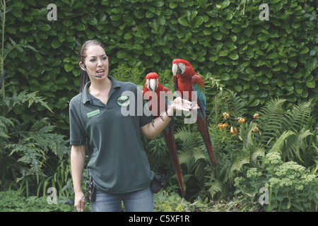 animal presenter giving talk on red and green macaws