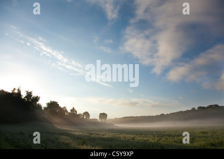 The sun is rising behind the distant trees, casting long rays of light through the thick fog covering the field - Stock Photo