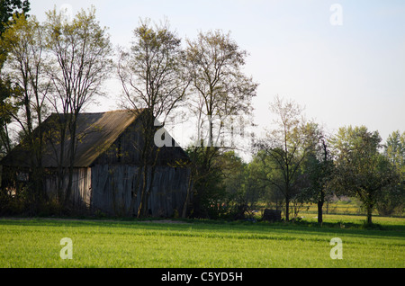 Old wooden shed in a field surrounded by the trees - Stock Photo