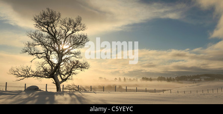 Tree silhouetted on winters sunrise, Strathspey, Cairngorms National Park, Scotland, Great Britain. - Stock Photo