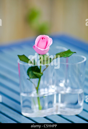 Rose in a vase - Stock Photo