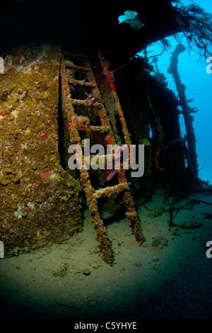 Ladder on the Prince Albert wreck off the island of Roatan, Honduras. - Stock Photo
