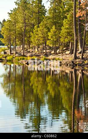 The beautiful Willow Springs Lake on the Mogollon Plateau is one of the most scenic and best spots to fish trout - Stock Photo