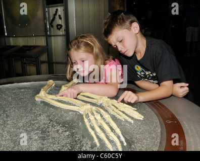 Children at a science museum evolution exhibit look at arm skeletons of a human and a chimpanzee - Stock Photo