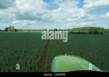 Tractor driving through wheat field - Stock Photo