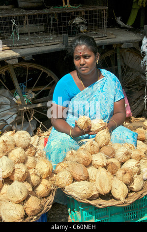 Woman selling coconuts fruit and vegetable market Tamil Nadu South India - Stock Photo