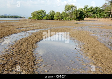 view of estuary in krabi river at low tide, krabi, thailand - Stock Photo