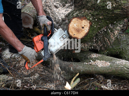 Close up of a man cutting a fallen tree with a chainsaw. - Stock Photo