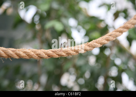 Ants on a rope carrying leaves - Stock Photo