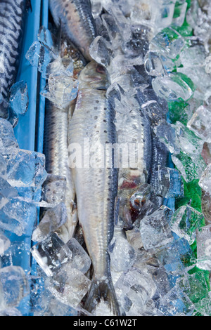 Whole sardines on ice in a public market - Stock Photo