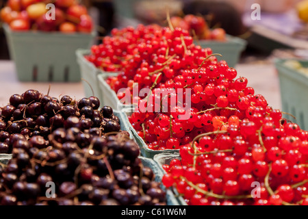 Fresh red and black currants for sale at market neatly displayed in crates - Stock Photo