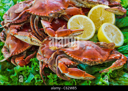 Steamed blue crabs ready to pick. chriskirkphotography.net - Stock Photo