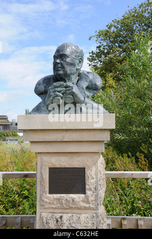 Sculpture of Sir Peter Scott at the Wildfowl and Wetlands Trust Slimbridge Gloucestershire England UK GB - Stock Photo