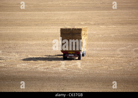 Truck collecting bales of hay in harvested wheat field - Stock Photo