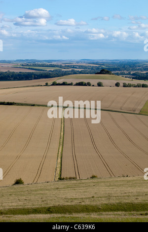 View of Wheat Fields from Milk Hill in Wiltshire - Stock Photo