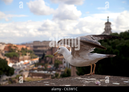 seagull departing towards the ancient Colosseum in Rome, Italy, Europe - Stock Photo