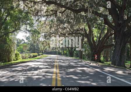 oak tree lined road by cemetery Alachua Florida - Stock Photo