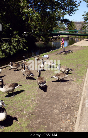 Young girl feeding wildfowl beside River Thet at Thetford Norfolk - Stock Photo