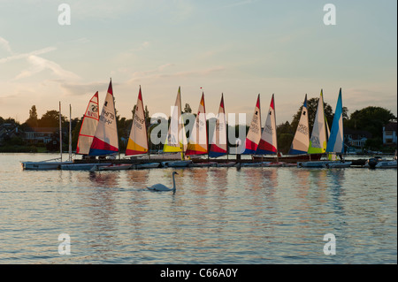 Sailing bugs and white swan on Oulton Broad UK boats - Stock Photo