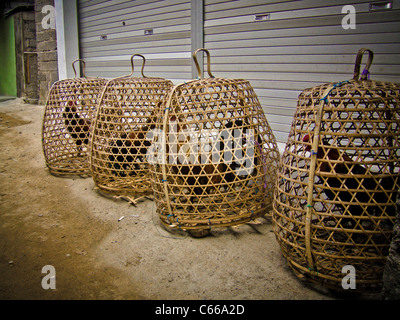 Chicken for sale in bamboo cages on roadside, Bali - Stock Photo