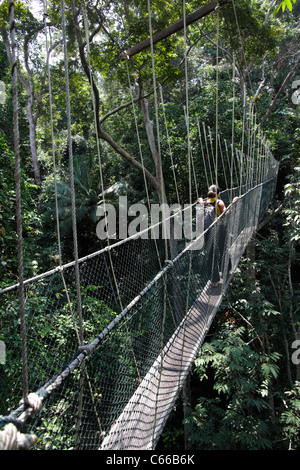 Canopy walk in the Taman Negara's rainforest, Malaysia - Stock Photo