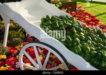 Arranged Peppers, tomatoes & flowers in a sloping white cart. Kirkham Prison Garden at the 28th Southport Flower - Stock Photo