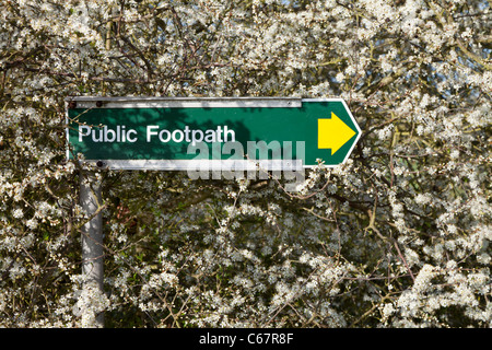 Metal public footpath direction sign yellow arrow fresh spring white blossom - Stock Photo