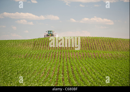A farmer drives a tractor through his corn field in Idaho in Summer - Stock Photo