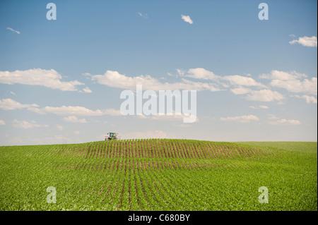 A farmer drives a tractor through his corn field in Idaho in Summer - Stock Photo