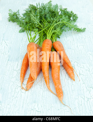 A bunch of carrots - Stock Photo