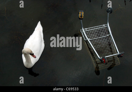A swan swimming in a stagnant pond next to a partially submerged shopping trolley. - Stock Photo