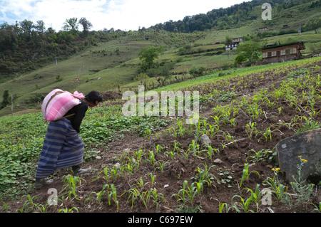 Woman carrying a rice bag uphill across fields. The Yakpugang farmer community near Mongar. Bhutan - Stock Photo