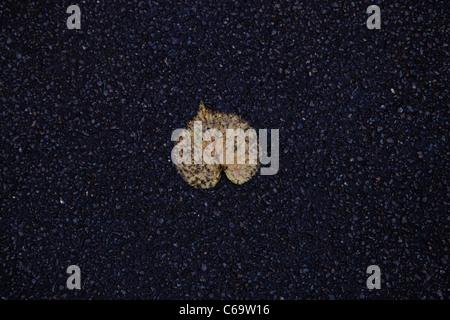 A leaf shed on asphalt in autumn - Stock Photo