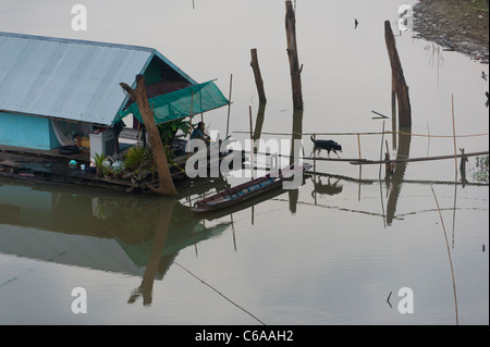 A dog leaves the floating family home along the banks of on the river Songaria, in Sangkhlaburi, Kanchanaburi province - Stock Photo