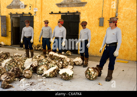 Workers and agave cores for production of tequila at Jose Cuervo Plant in Tequila - Stock Photo