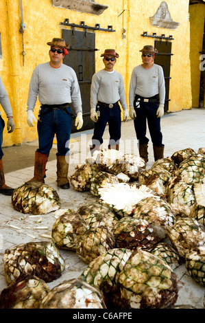 Workers at Jose Cuervo Plant in Tequila - Stock Photo