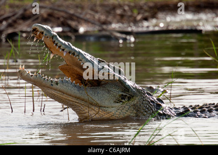 Crocodile at Lake Chamo near Arba Minch in the Omo Valley, Southern Ethiopia, Africa. - Stock Photo