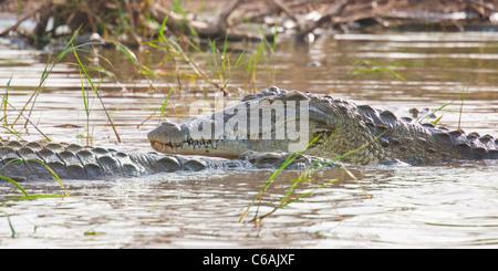 Crocodiles at  Lake Chamo near Arba Minch in the Omo valley, Southern Ethiopia, Africa. - Stock Photo