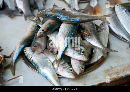 Freshly caught fish fish market fort cochin kochi for Chinese fish market near me