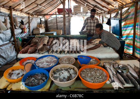 A fish vendor at fort cochin market stock photo royalty for Chinese fish market near me