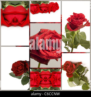 Montage of different red rose flowers pictures - Stock Photo
