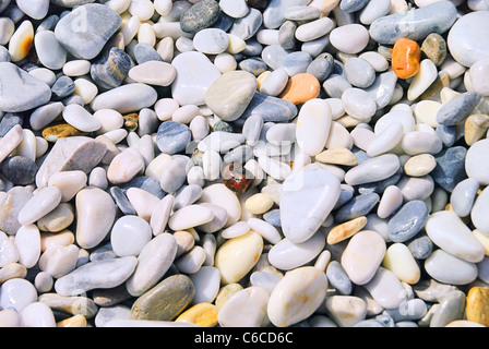 Kieselstrand Toskana - pebble beach Tuscany 04 - Stock Photo
