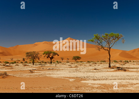 trees in desert landscape of Namib with dunes and red sand at Sossusvlei, Namib-Naukluft National Park, Namibia, - Stock Photo