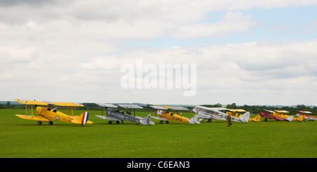 panoramic view of a line of tiger moths - Stock Photo