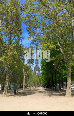 Avenues of Plane Trees in the Champ de Mars, Paris - Stock Photo