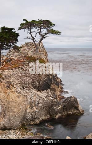 The famous Lone Cypress tree (Cupressus macrocarpa) of Pebble Beach, California. - Stock Photo