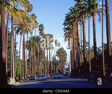 Palm trees along boulevard, Beverly Hills, Los Angeles, California, United States of America - Stock Photo